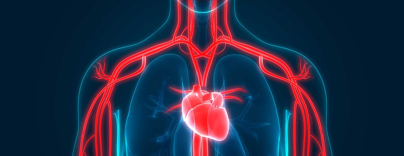 Quick guide to a heart transplant